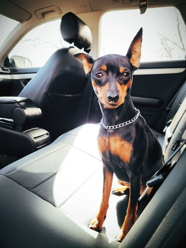 dog on waterproof custom seat covers black leather chehol.org