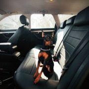 black custom seat covers premium protection chehol.org